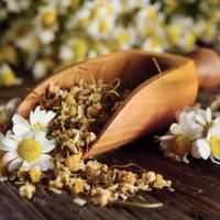 Chás de camomila e suas flores